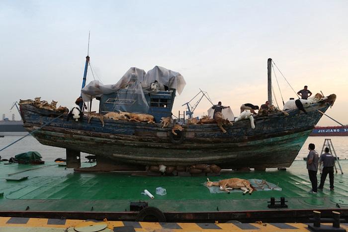 Рыболовецкое судно, послужившее основой для «Девятого вала».