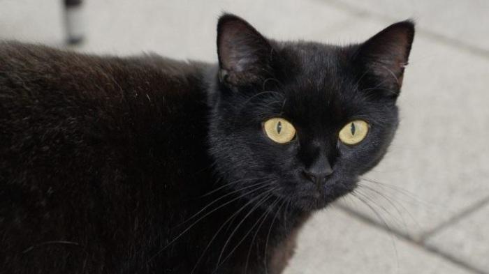 Черная кошка - символ невезения.   Фото: historicmysteries.com.