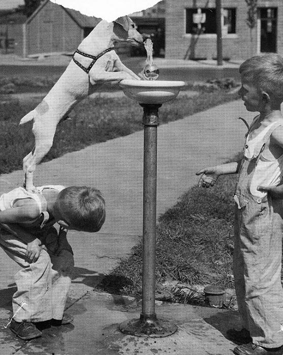 Мальчишка помогает псу напиться из фонтанчика.