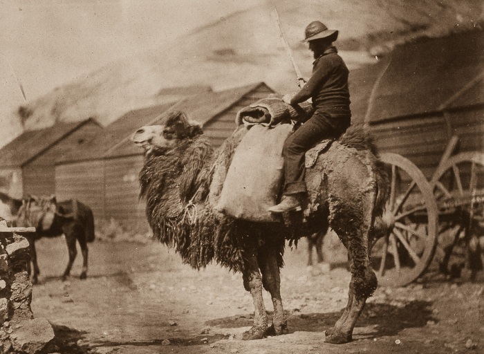 Британский моряк на верблюде в Бакаклаве.