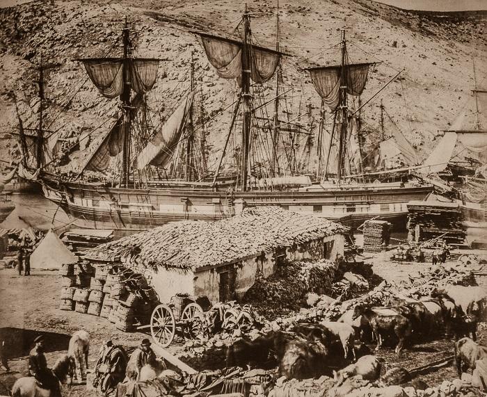 Скот у пристани в Балаклаве.