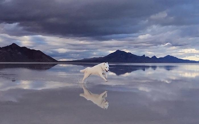 Соленое озеро Bonneville в штате Юта.