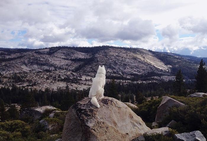 Eldorado National Forest.