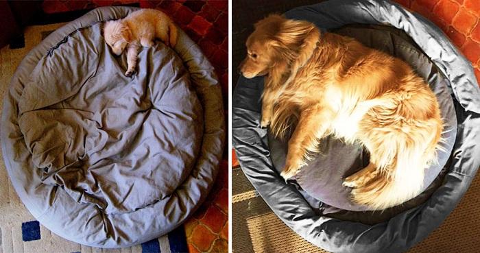 Фото собачки до и после взросления.