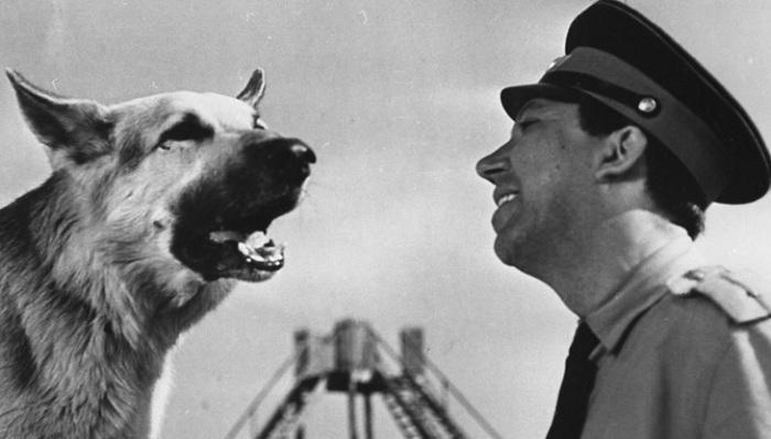 Кадр из к/ф «Ко мне, Мухтар!» (1964). | Фото: time2forex.ru.