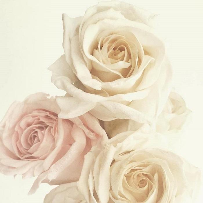 Сахарные розы от Мэгги Остин. | Фото: mymodernmet.com.