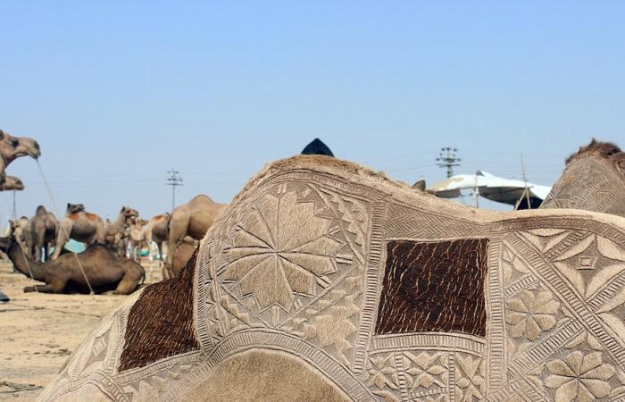 Украшенный верблюд на крупнейшем рынке рогатого скота в Азии.