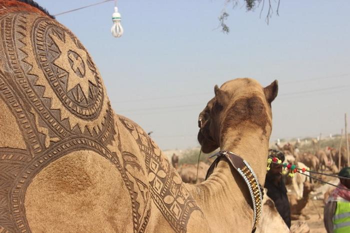 Верблюд с выстриженным орнаментом на горбу.
