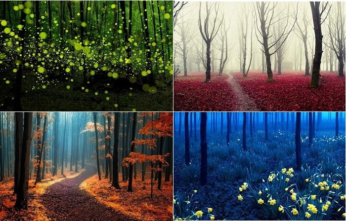Снимки загадочного леса.