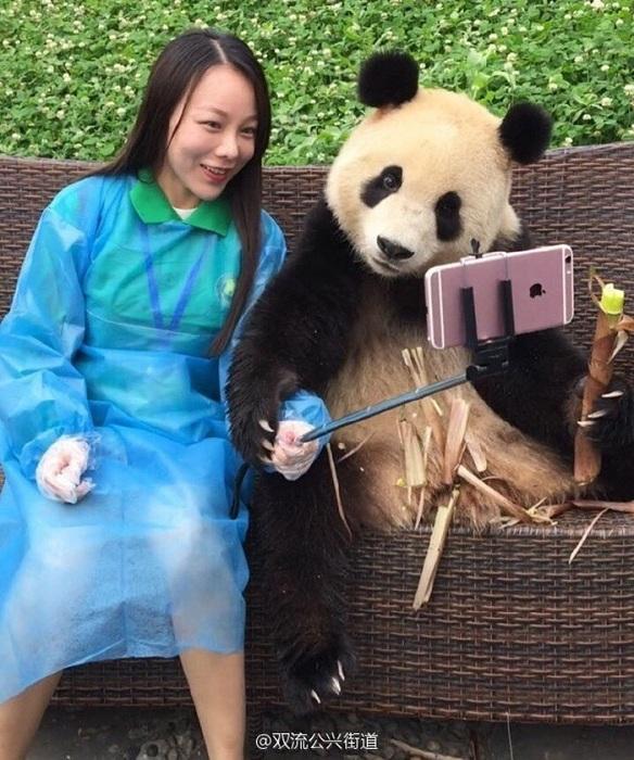Самая няшная панда.