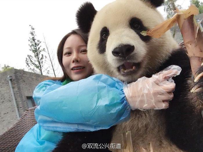 Панда позирует туристам для селфи.