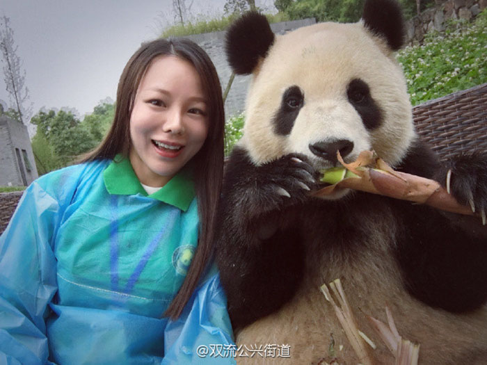 Панда. которая любит позировать на камеру.