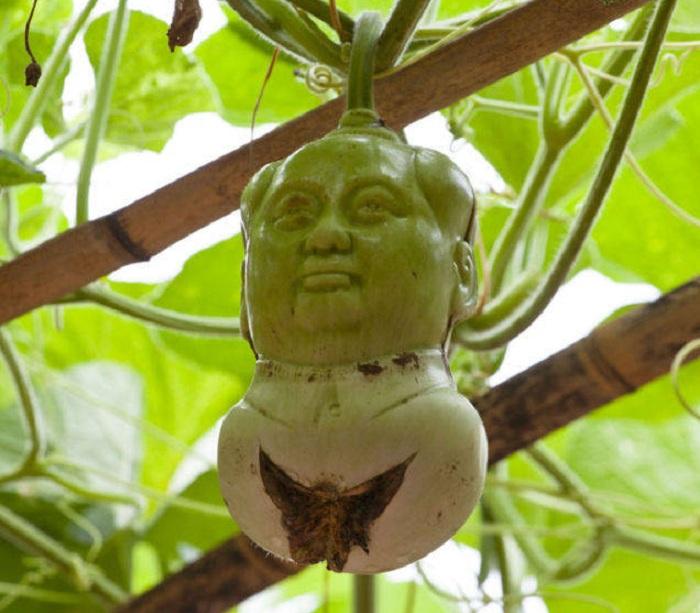 Скульптура,«выращенная» из тыквы.