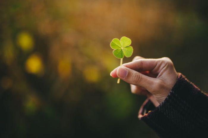 Четырехлистный клевер - символ удачи в Ирландии.   Фото: fthmb.tqn.com.