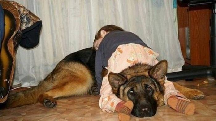 Ребенок уснул на собаке.
