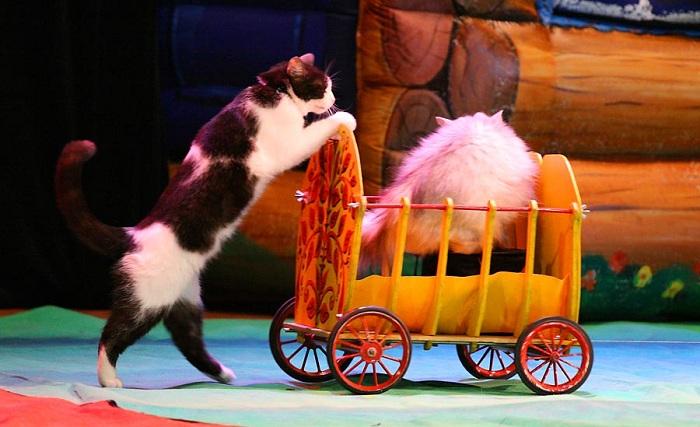 Дрессированные кошки Юрия Куклачева. | Фото: files.netall.ru.