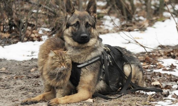 Задача этого кота - бесить собак. | Фото: riavrn.ru.