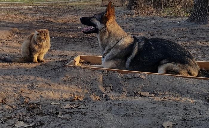Вот участвует в дрессировке собак. | Фото: ochevidets.ru.