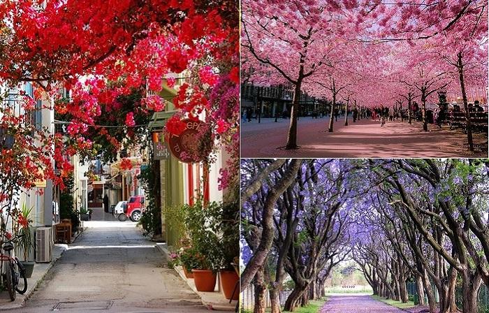 Улицы и парки в тени цветущих деревьев.