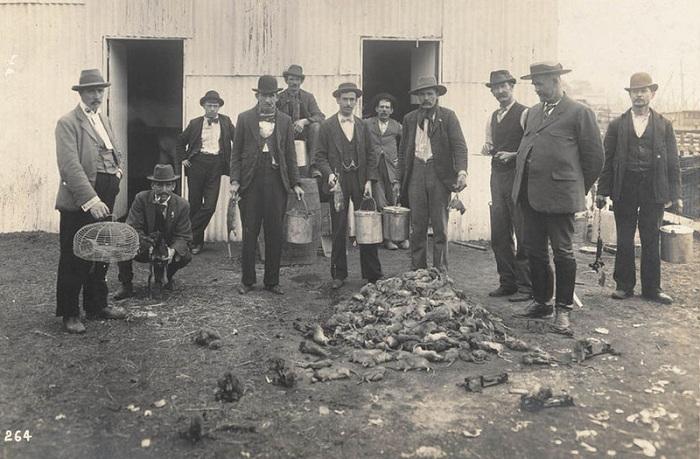 В прошлых веках профессия крысолова была очень популярна. | Фото: assets.atlasobscura.com.