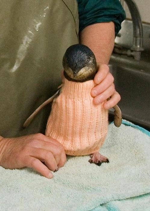 Пингвин в свитере.