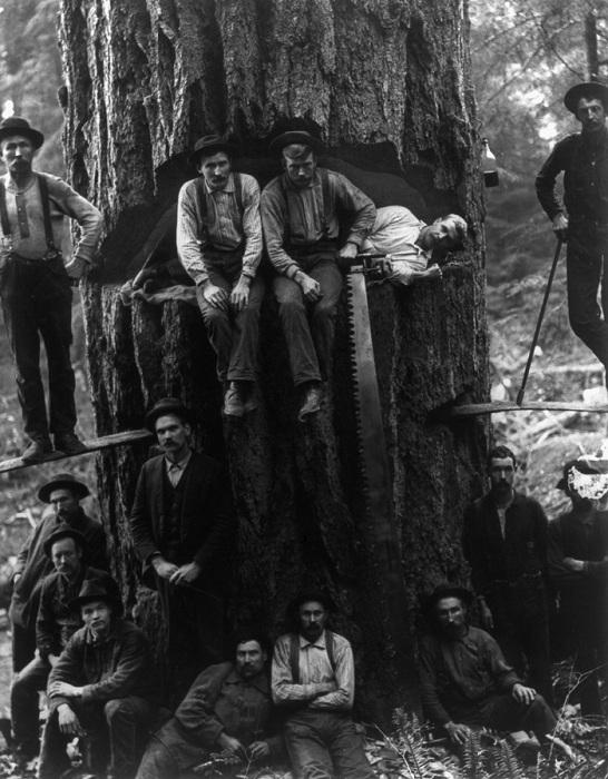 Лесорубы на фоне ели диаметром 3,5 метра, 1901 год.