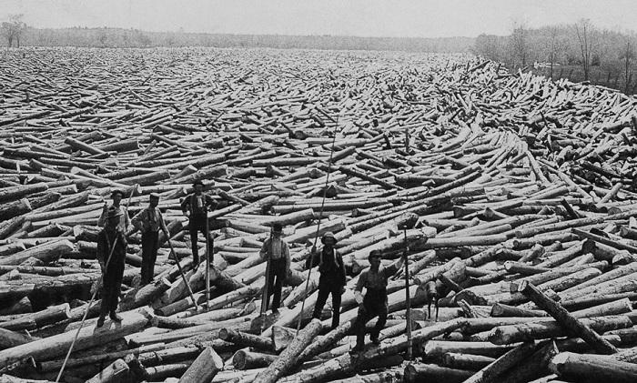 Мужчины позируют на спиленных деревьях, 1907 год.