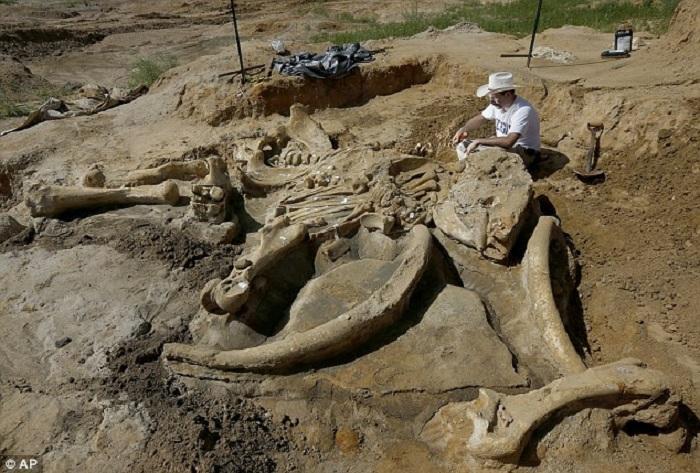 В Техасе нашли скелет мамонта.
