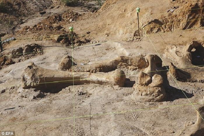 Техасский фермер обнаружил скелет мамонта.