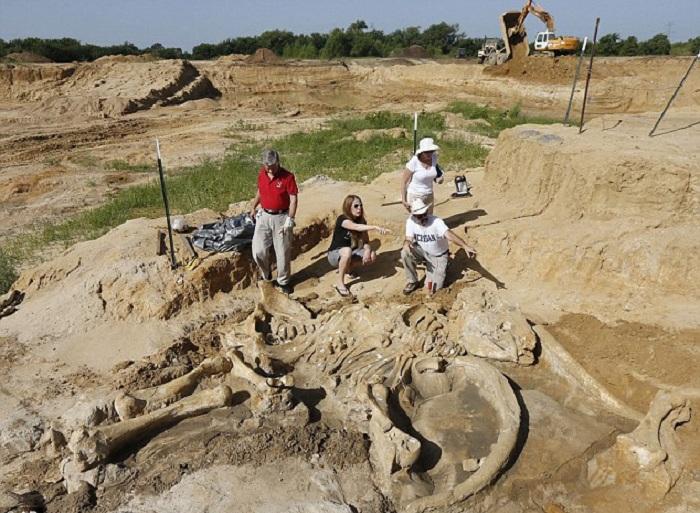 Скелет мамонта, сохранившийся почти в полостью (Техас).