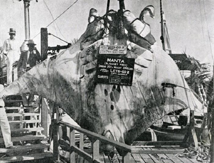 Реальный снимок подводного ската (манты). | Фото: gizmodo.com.