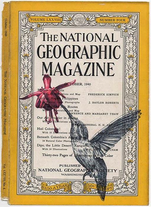 Изображение птицы на обложке журнала National Geographic.