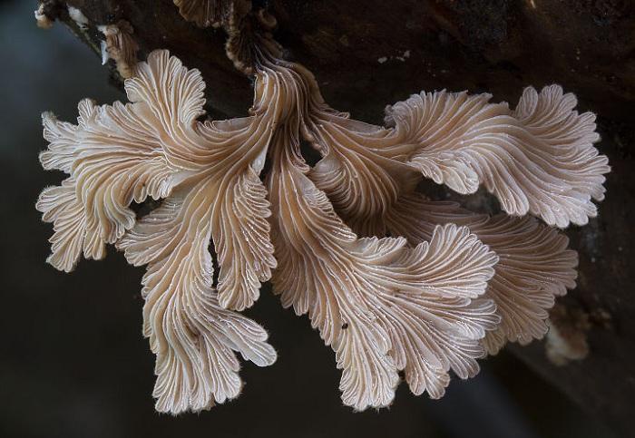 Снимок необычного гриба, сделанный фотографом Steve Axford.