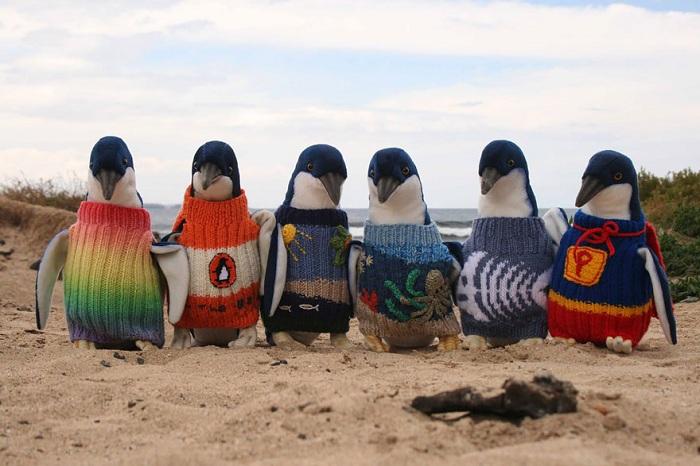 Пингвины в свитерах.