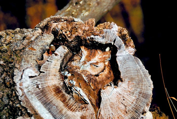 owl-camouflage-disguise-1.jpg