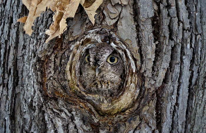 owl-camouflage-disguise-13.jpg