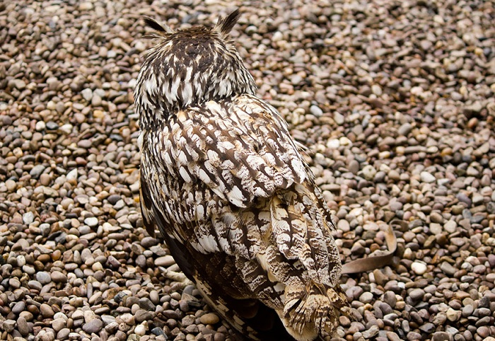 owl-camouflage-disguise-15.jpg