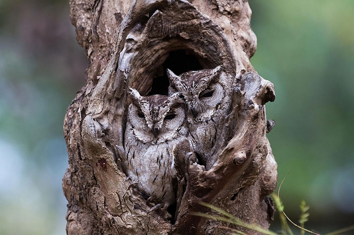 owl-camouflage-disguise-25.jpg