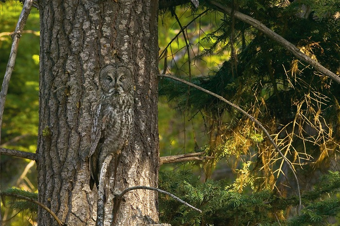 owl-camouflage-disguise-27.jpg