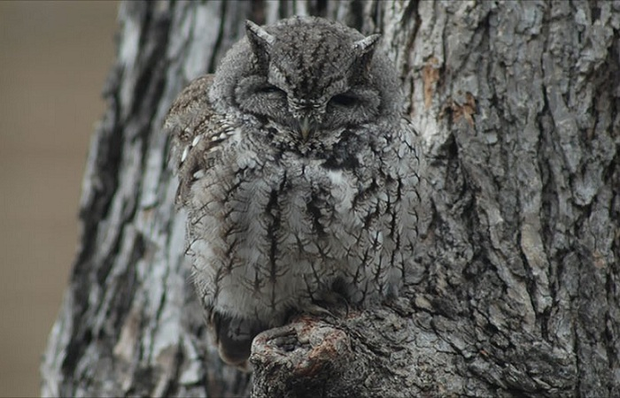 owl-camouflage-disguise-7.jpg