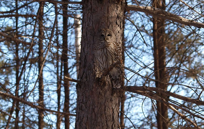 owl-camouflage-disguise-9.jpg