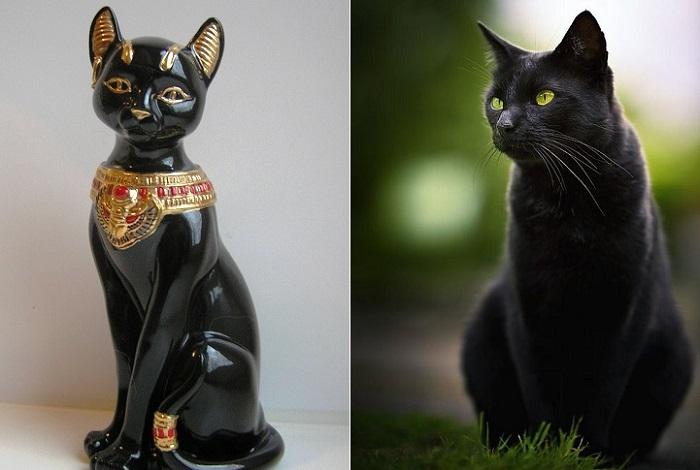 Черный кот - символ невезения.