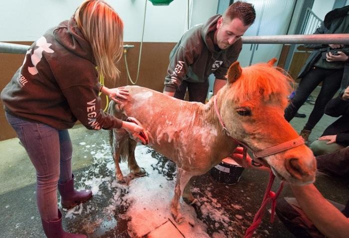 Животное помыли впервые за много лет. | Фото: ushilapychvost.ru.