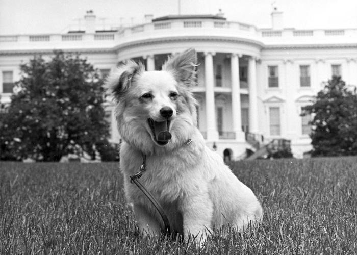 Пушинка - собака, подаренная Хрущевым семье Кеннеди. | Фото: ic.pics.livejournal.com.