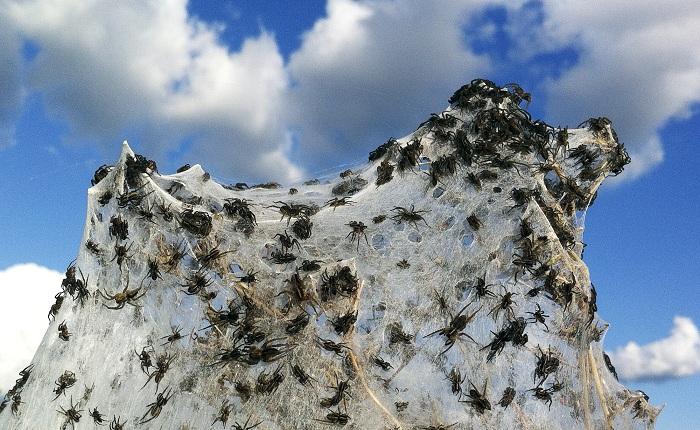 Осадки из паучков.