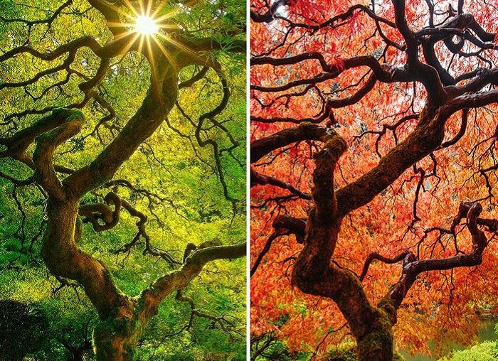 Осеннее преображение природы.
