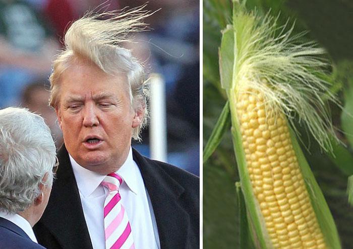 Прическа Дональда Трампа выглядит как метелка кукурузы.