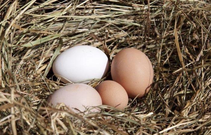 Сырые куриные яйца часть использовали в качестве орудия пытки. | Фото: ferma-biz.ru.
