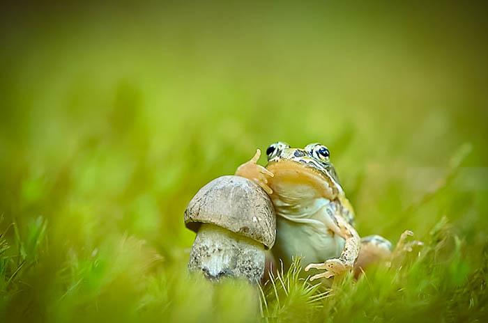 Фотографии грибов и лесных обитателей