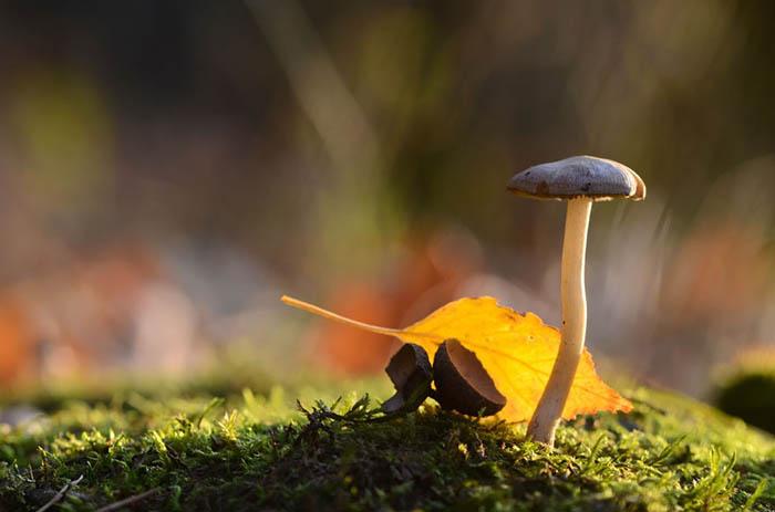 Взгляд на природу от Вячеслава Мищенко.
